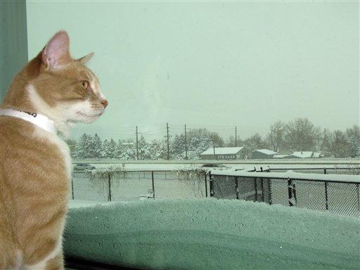 """Encuentran a """"Chester"""", el gato terapeuta"""