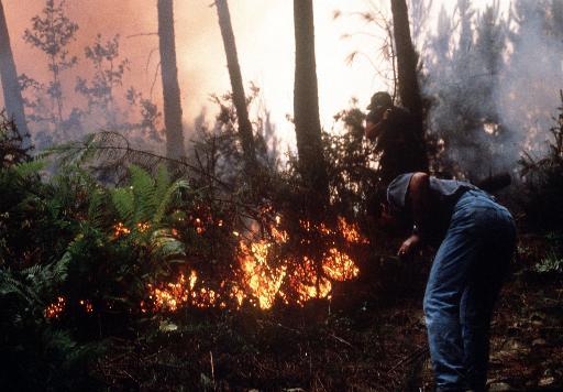 Viento propaga fuego en montañas de California