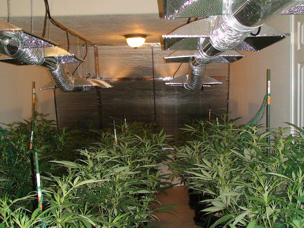 Caen por cultivar marihuana en una casa