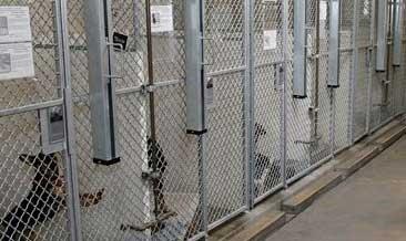 Múltiples fallas en refugios de animales de L.A.