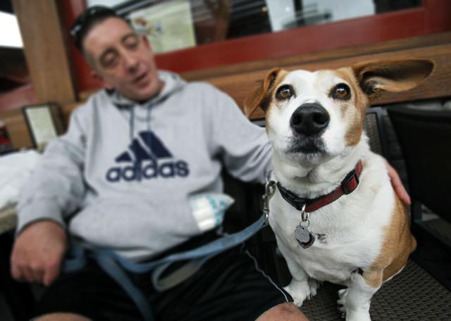 Restaurantes podrán servir a los perros