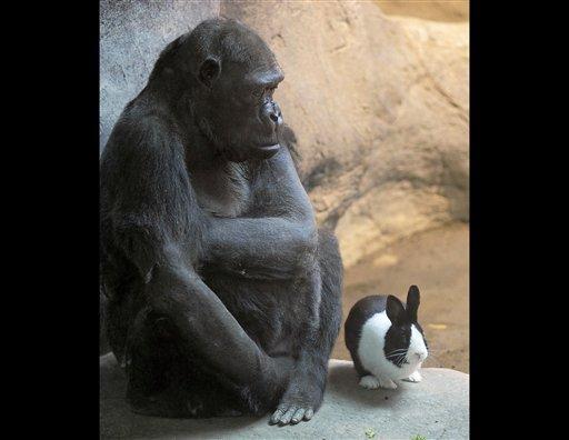 Samantha recupera la alegría de vivir gracias al conejo Panda.