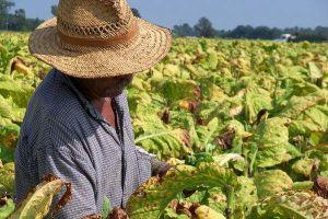 Empujan iniciativa para legalizar a campesinos en California
