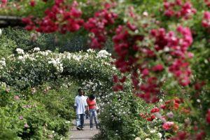 Jardín Botánico de Brooklyn abre su centro de visitantes