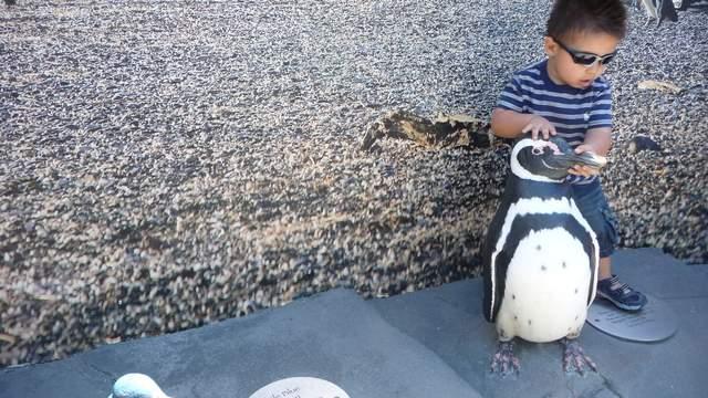 Llegan los pingüinos