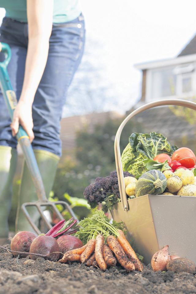 Horticultura en casa