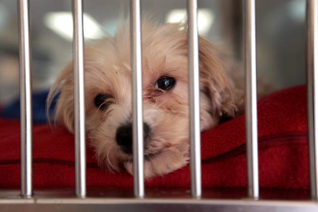 Cachorros ayudarán a terminar con pordioseros