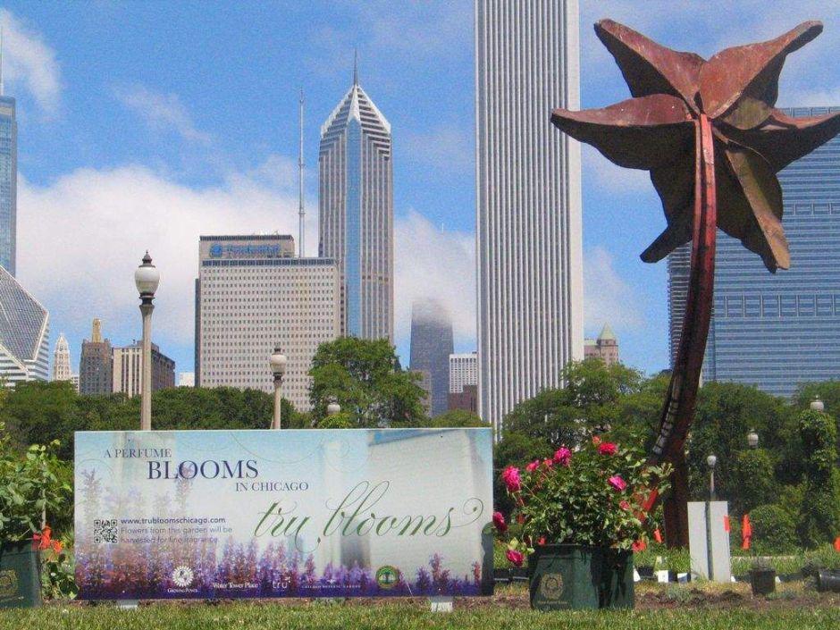 Perfume con olor a Chicago