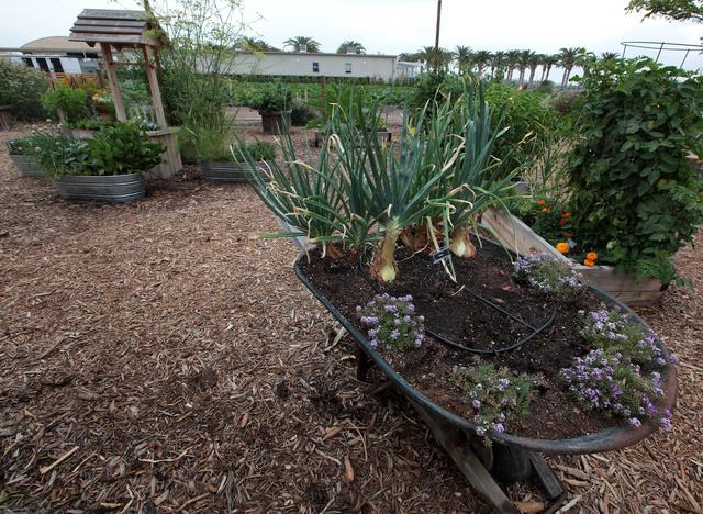 El parque ofrece  la oportunidad de aprender  cultivo de plantas y de hortalizas.