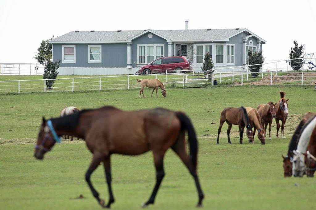 EEUU subastará caballos confiscados a Zetas