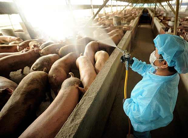 Nueva gripe porcina infecta a casi 200 personas