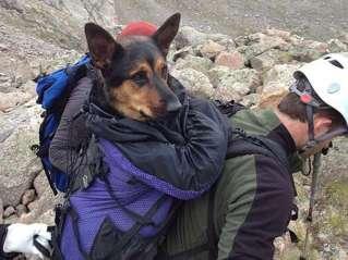 Enfrenta juicio por abandonar perra en montaña