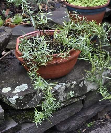 Consejos para cuidar tus plantas dentro de casa (fotos)