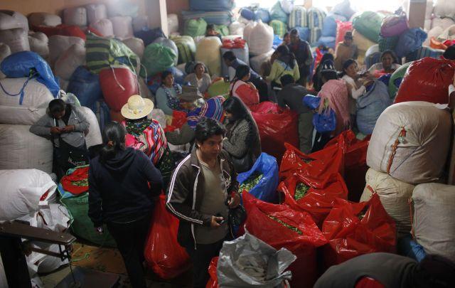 Bolivia reduce por primera vez cultivos de hoja de coca desde 2006