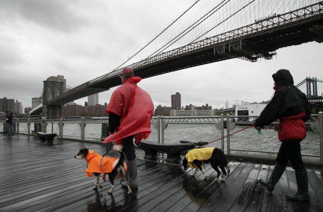 Si va a un refugio en NY cargue con su mascota  (fotos)