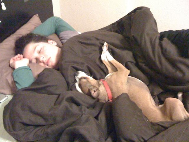 Dormir con tu mascota: hazlo seguro
