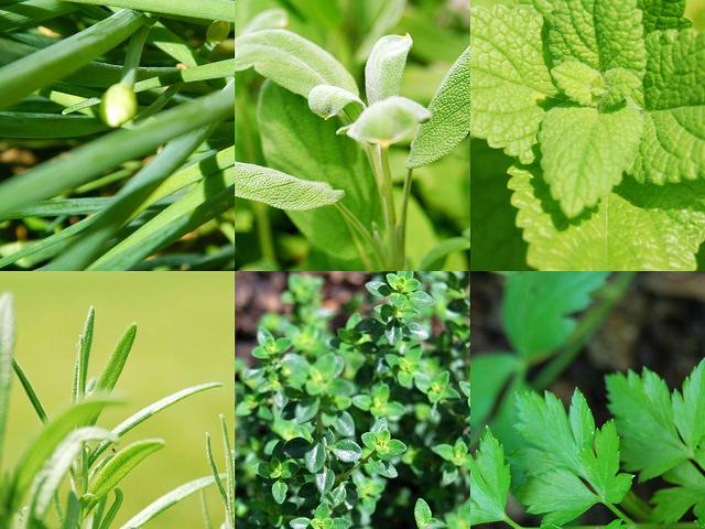 Essential gardening tools to start an herb garden