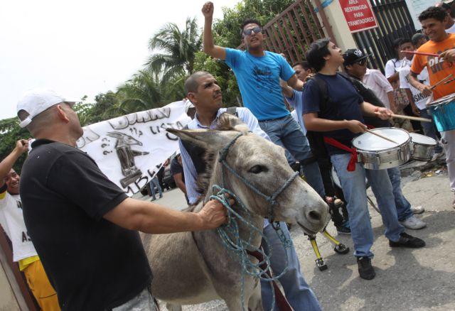 Ecuador: rechazan inscribir a burro como candidato