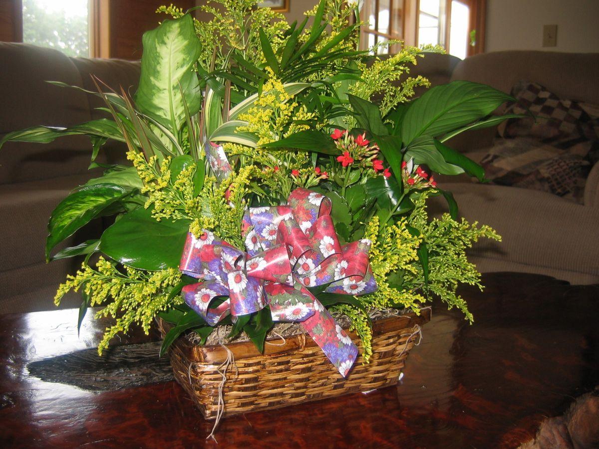 Las plantas en tu hogar, el mejor aliado para crear puntos de interés visual
