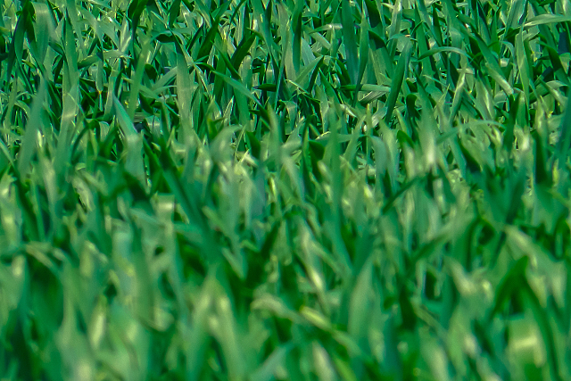 Lawn aeration for a healthier, more beautiful lawn