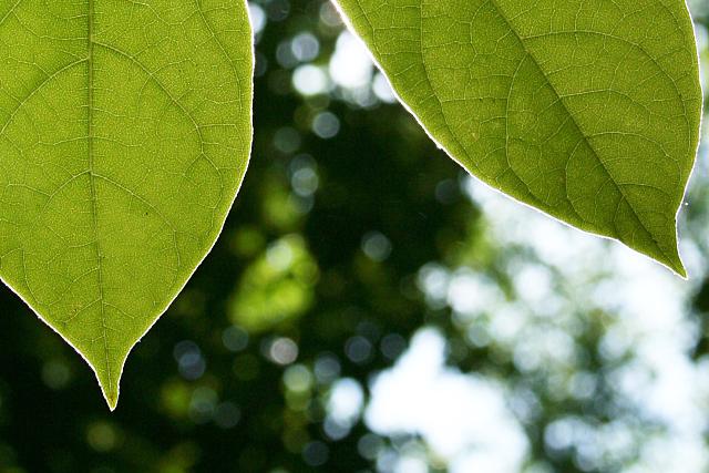 Verde que te quiero verde en 2013: el color de moda