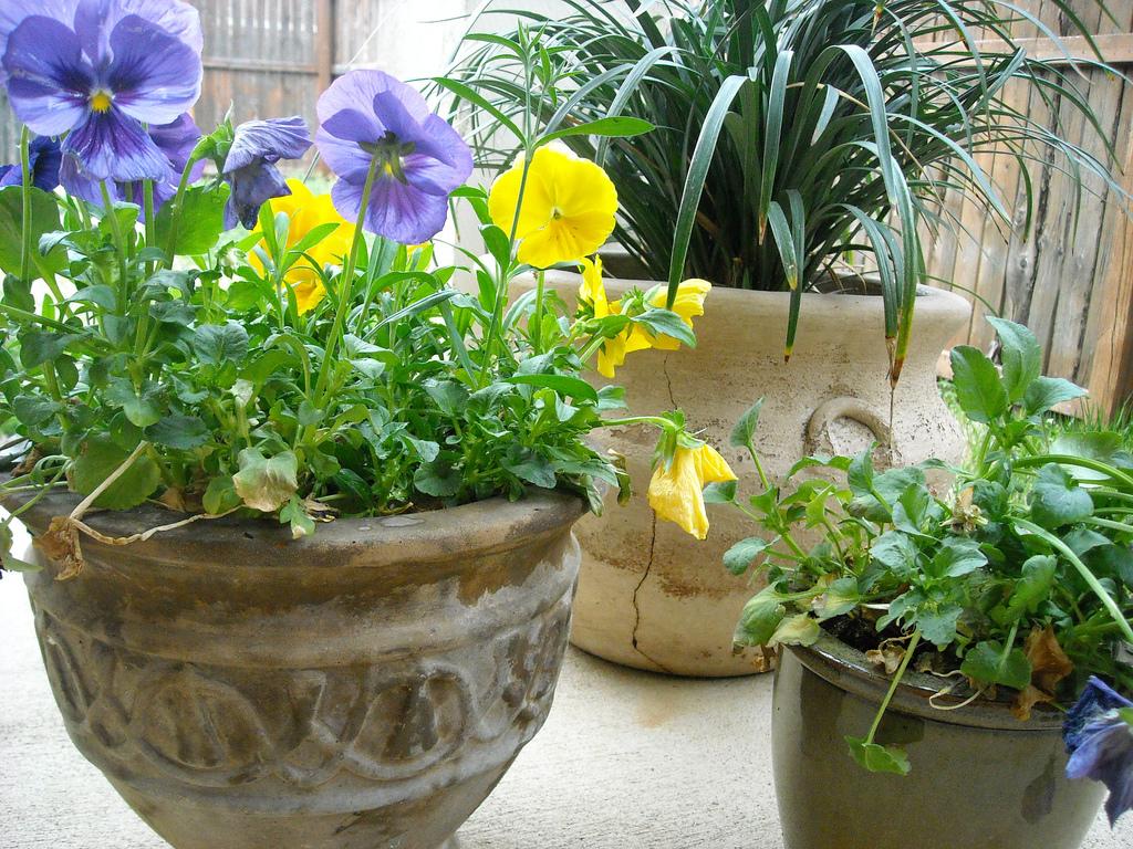 Consejos sobre la decoración con plantas