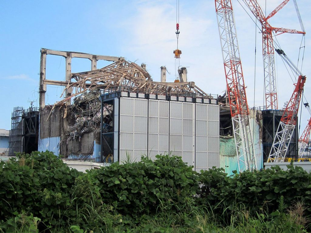 Rata sería culpable de falla en planta nuclear