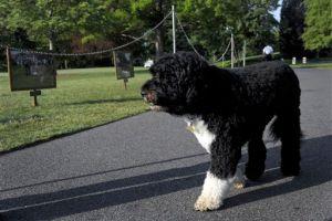 Mujer de presidente israelí da juguete al perro de Obama