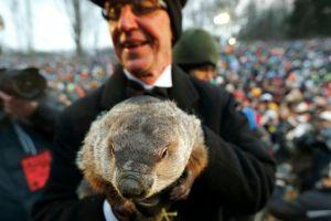 "Piden ""pena de muerte"" para Phil, la marmota meteoróloga"