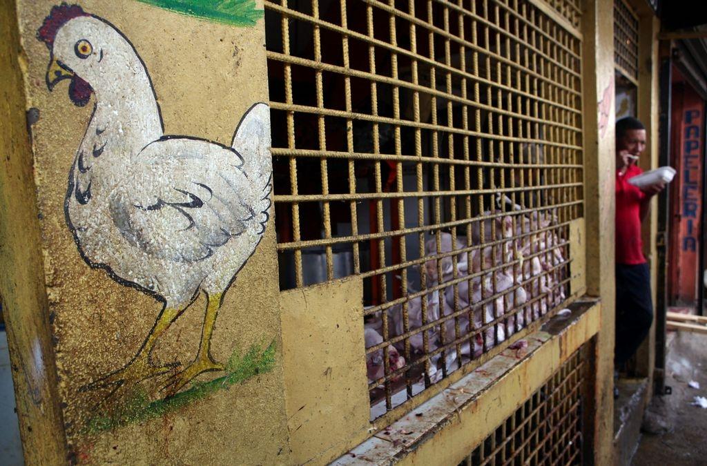 Dominicana niega que gripe aviar sea causa de deportaciones
