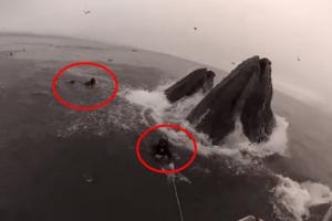Video del día: ballenas casi devoran a buzos