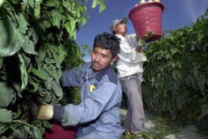 Trabajadores del campo: entre el miedo y la necesidad