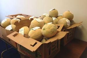 Congresistas de EEUU reciben melones como protesta