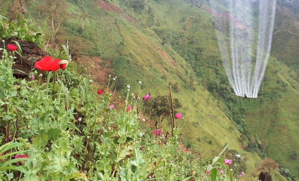 Sembradío en las montañas colombianas.