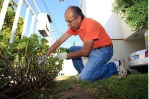 Prevenga la presencia de plagas en su jardín