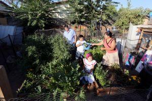 Familias cultivan huertos en casas en el sur de California