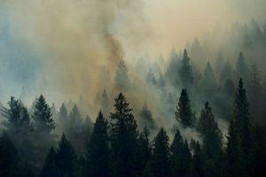Incendio fuera de control arde cerca de Yosemite