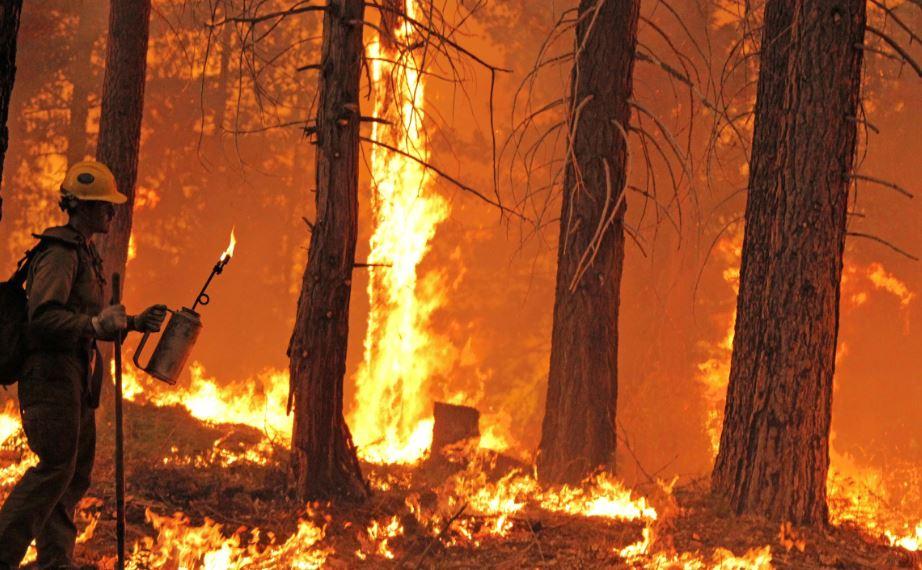 Presos combaten incendio Rim en California