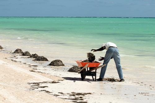Miles de voluntarios limpian playas de Miami-Dade