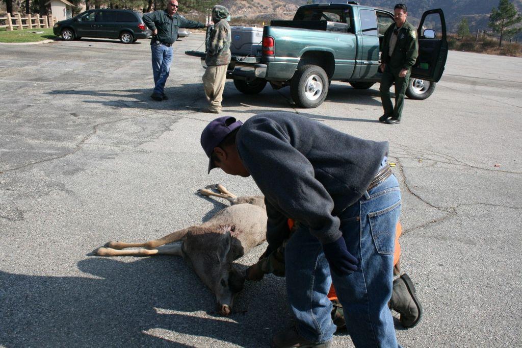 California podría prohibir balas de plomo para cacería