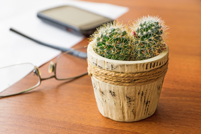 Decorar con plantas tu oficina, opciones sencillas