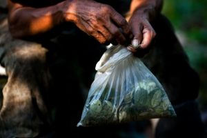 Valle en Perú es el mayor productor de coca en el mundo