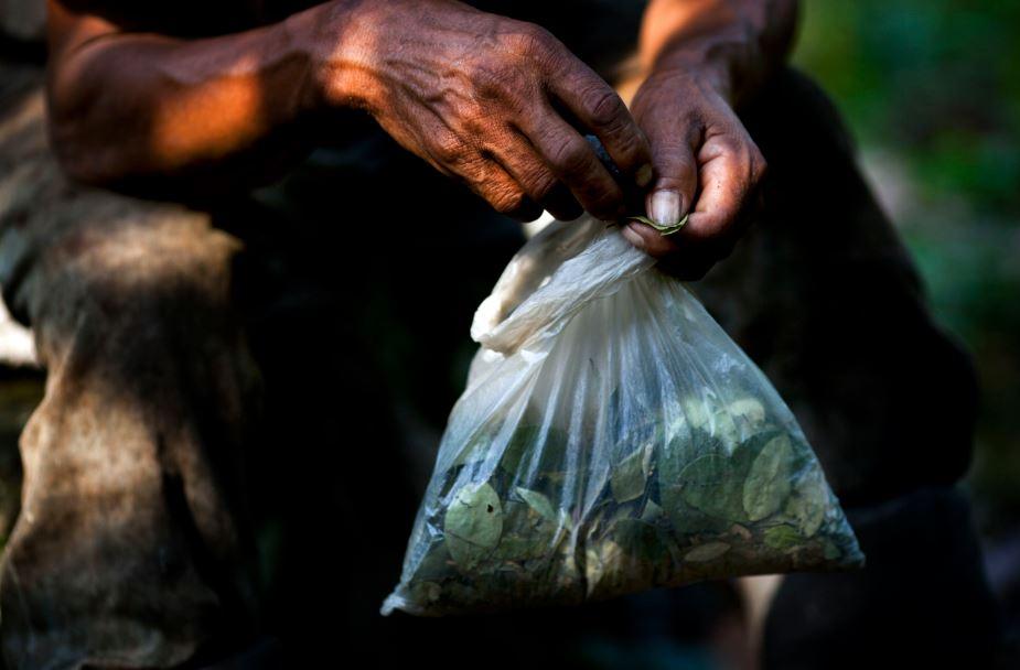 La coca es el sustento de la economía de este distrito predominantemente rural de 40,000 habitantes.