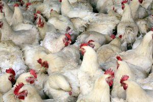 Alertan sobre cómo evitar el contagio con salmonela