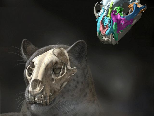 Esta reconstrucción artística muestra cómo habría lucido el felino extinto.