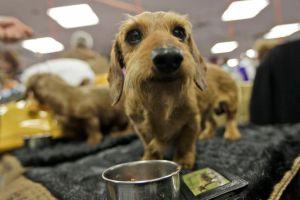 Ni los perros se salvan del brote de salmonela en EEUU