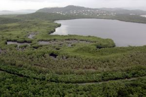 Laguna bioluminiscente en Puerto Rico se vuelve a encender