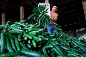 Frenan ingreso de pepino mexicano a EEUU por plaga