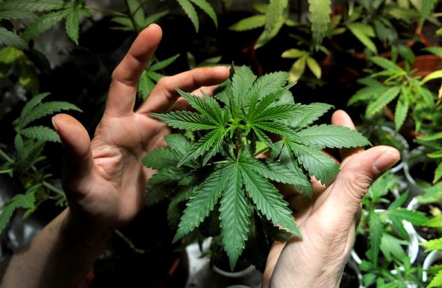 Aumenta en EEUU el apoyo al uso de la marihuana