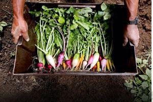 Alimentos locales mejoran tu cocina